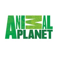 Watch Animal Planet Live TV Online For Free